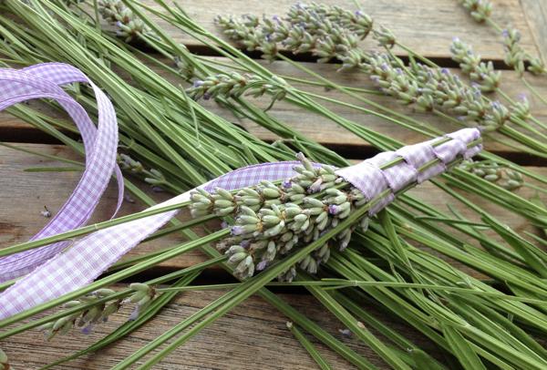 Lavendelstäbe-zwischenstandLavendelstäbe-zwischenstand